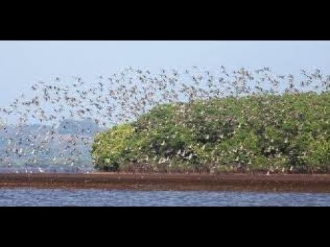Dr.-Salim-Ali-Bird-Sanctuary-Panji-Goa