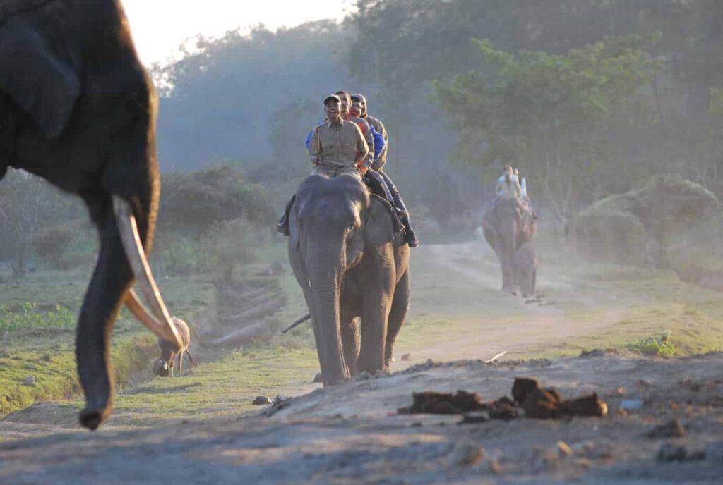 Elephant Joy Ride Kaziranga National Park