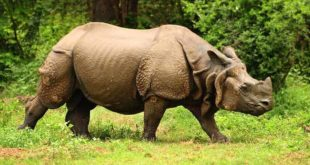 Kaziranga National Park is nature at its best