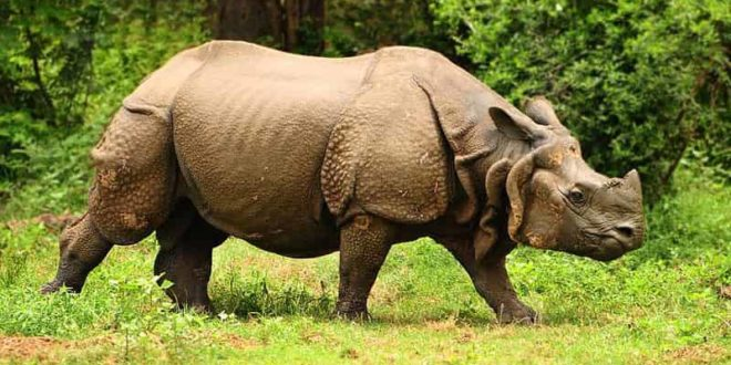 Kaziranga National Park is nature at its best