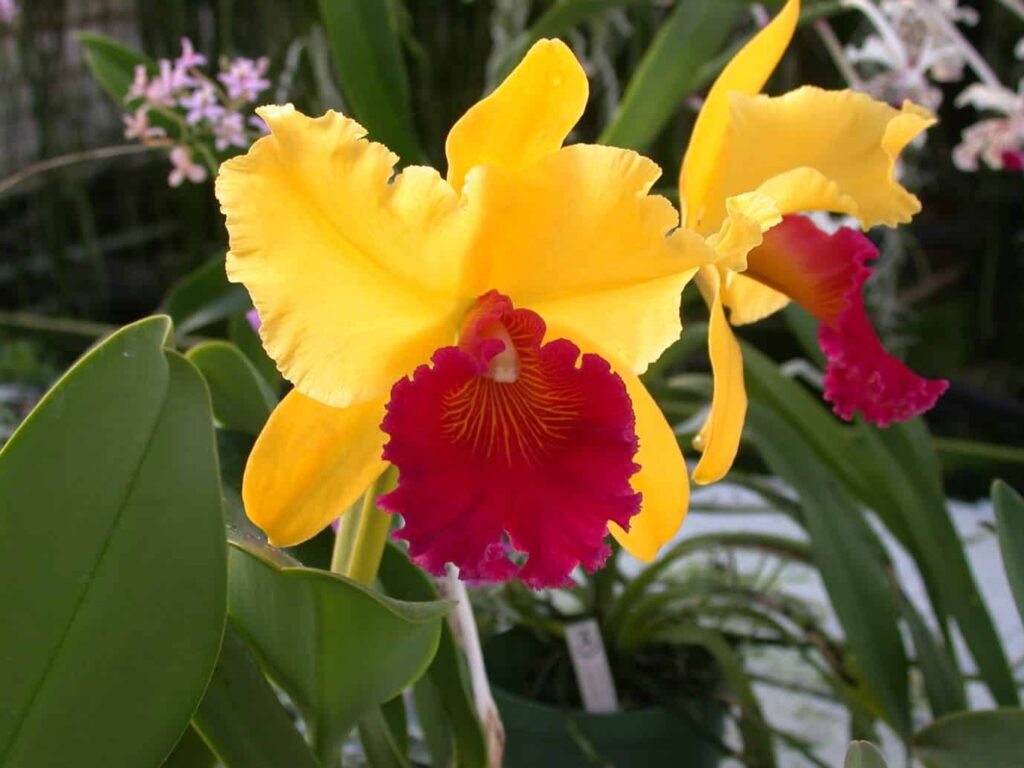 Kaziranga-Orchid-Park-is-spread-over-almost-6-acres-and-there-grow-more-than-500-species-of-beautiful-orchids