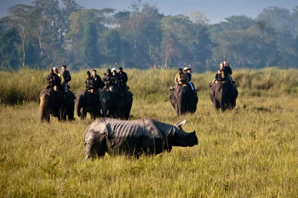 elephant-safari-is-an-optimum-and-adventurous-way-to-view-wild-animals-in-their-natural-habitat