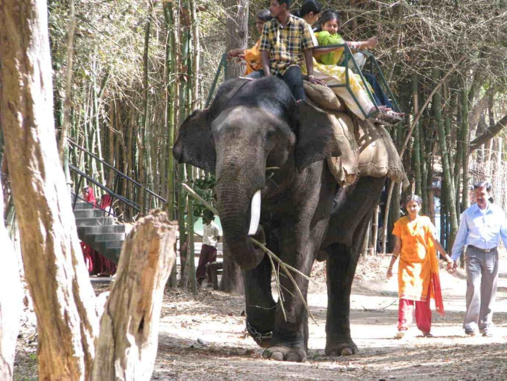 Elephant-ride-Things To Do in Nisargadhama Coorg