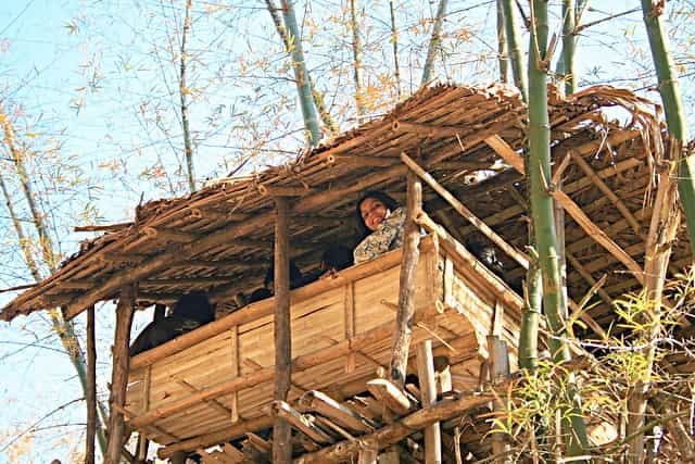 It-has-good-quality-river-side-cottages-as-well-as-Treetop-cottages-made-of-Bamboo