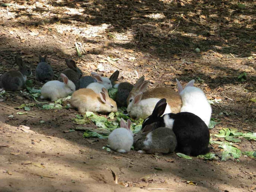 The-place-has-a-children-park-and-rabbit-enclosure-as-well