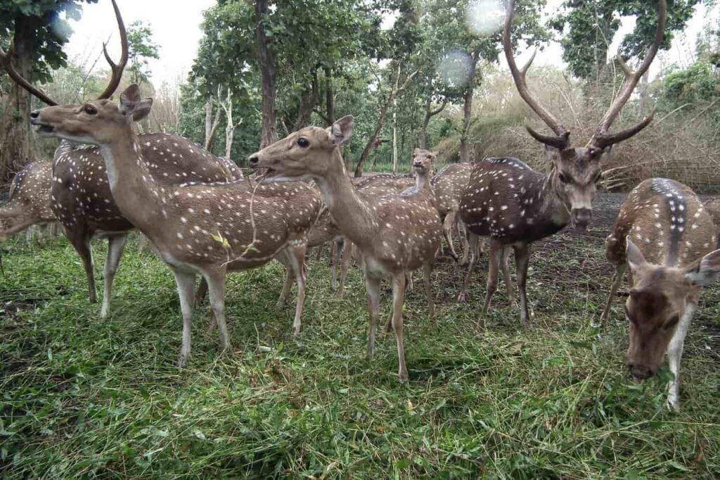 Visit-the-Deer-Park-Nisargadhama-Coorg