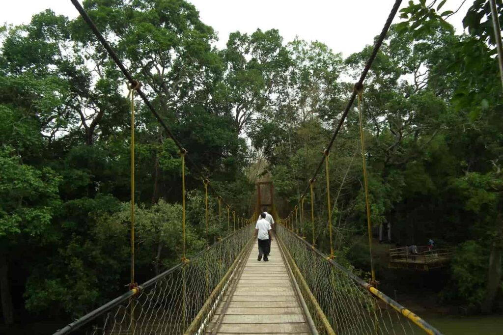 Things To Do in Nisargadhama Coorg