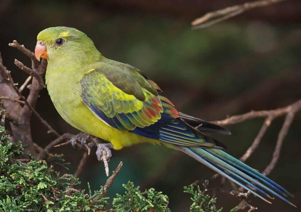 Admire-Birds-in-Sona-Nadi-Sanctuary-of-Corbett-National-Park