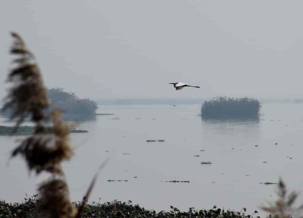 Harike-Wetlands-and-Bird-Sanctuary-Things To Do in Amritsar-Places-to-Visit-in-Amritsar