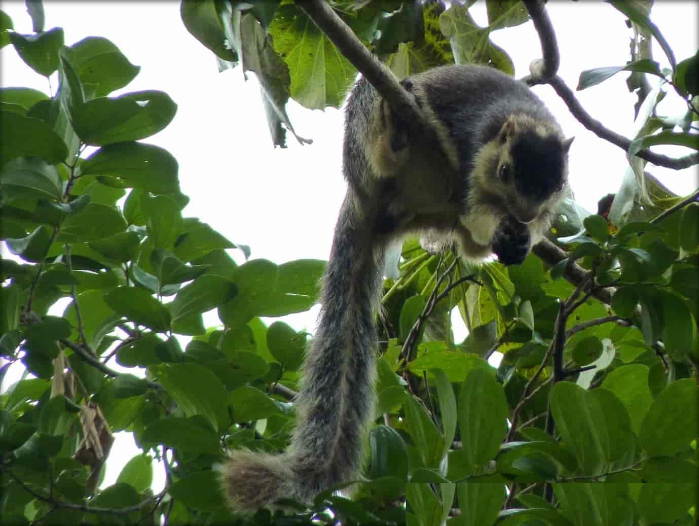 Idukki-Wildlife-sanctuary-is-the-most-beautiful-tourist-attraction-in-Idukki