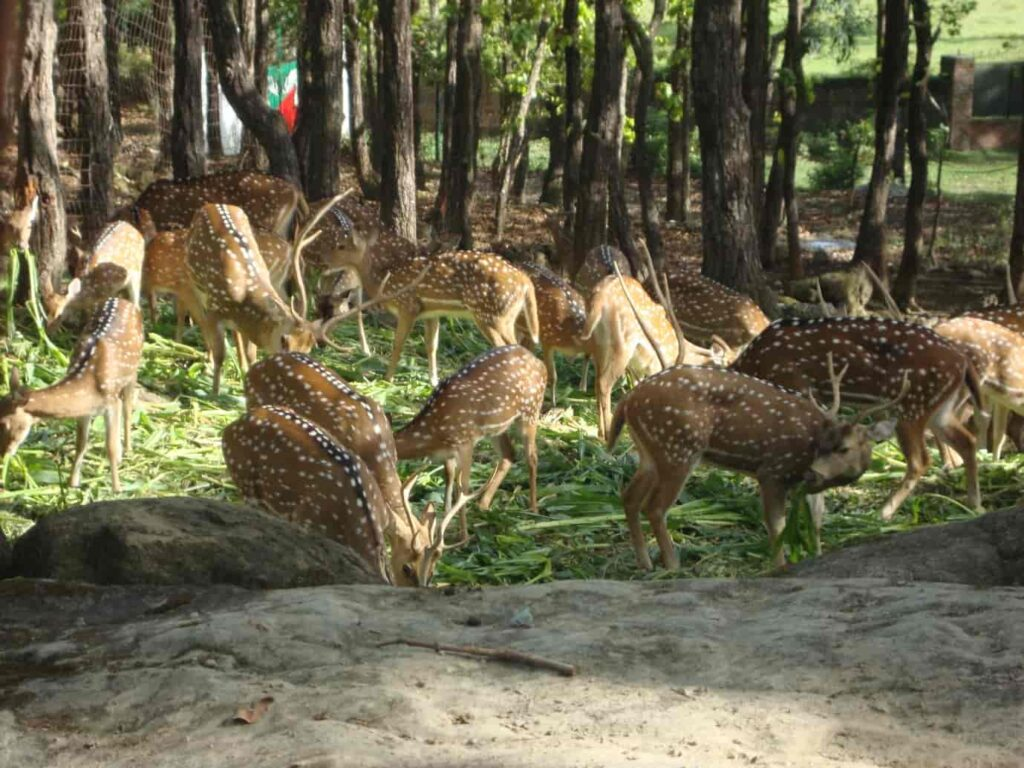 Malsi-Deer-Park-is-a-zoological-garden-at-the-base-of-Shivalik-Range-is-one-of-the-best-places-to-visit-in-Dehradun