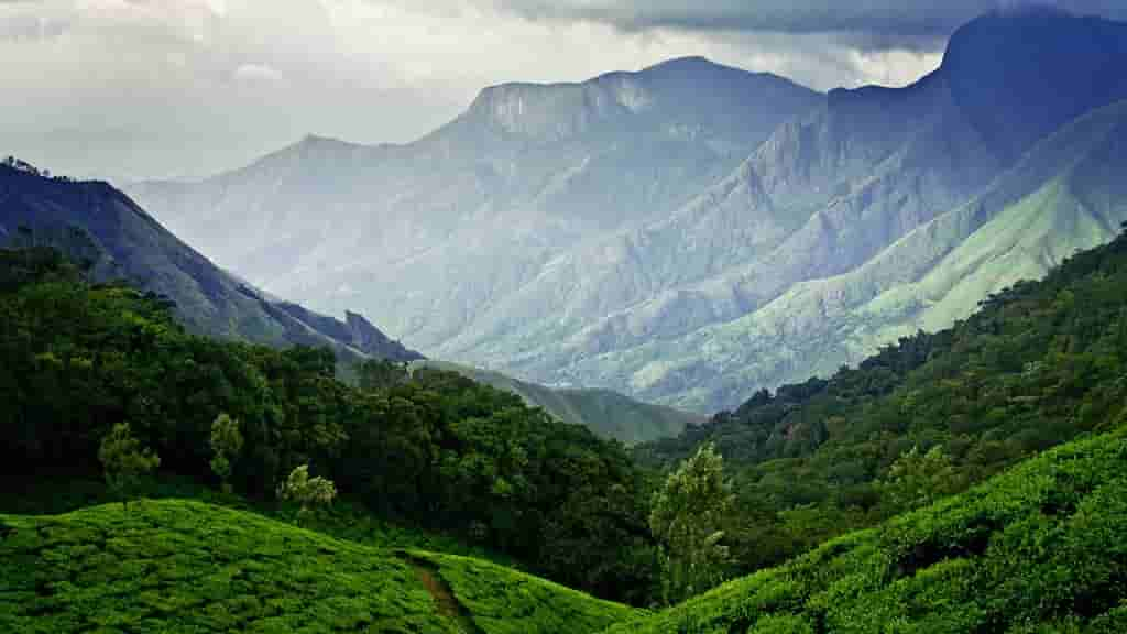 Munnar-India-is-the-largest-town-of-the-Idukki-district-and-is-nestled-at-a-height-of-5000-to-8000-feet