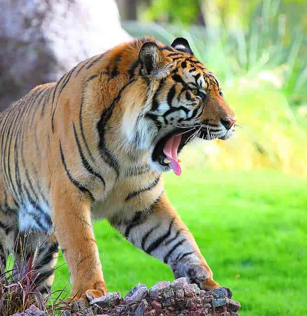 Periyar-National-Park-is-famous-for-its-lush-green-beauty-and-flora-fauna-diversity.-Spread-over-257-sq.-km.-it-forms-an-important-eco-tourism-center-and-one-of-the-best-Idukki-Tourist-Places