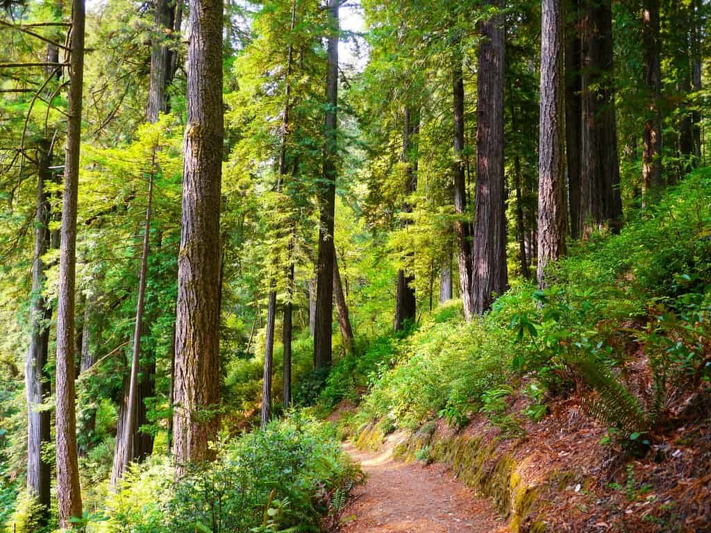 Reveling-in-Nature-Walks-is-just-one-of-the-offbeat-things-to-do-in-Lansdowne