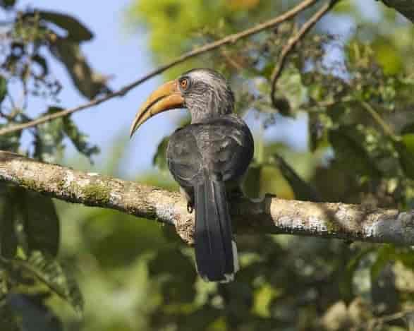 Thattekkad-Bird-Sanctuary-important-tourist-destination-in-Idukki.