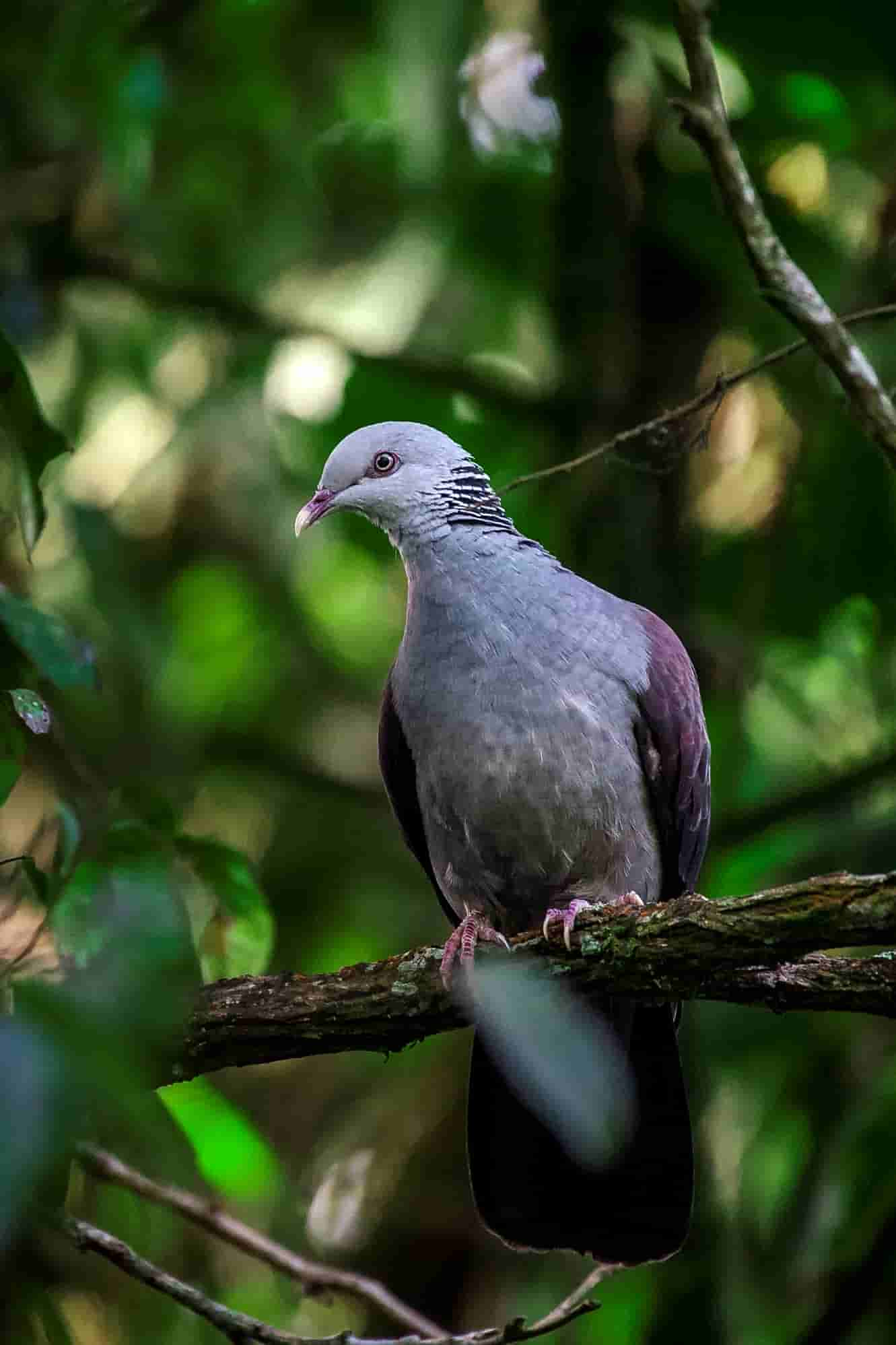 The-Pampadam-National-Park-has-many-species-of-rare-birds-fauna-and-flora.-It-is-one-of-the-Idukki-unexplored-places