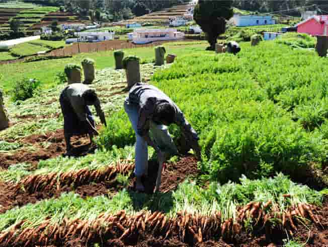 Vattavada-is-a-beautiful-village-near-the-Idukki-town-and-is-known-for-its-agricultural-prowess