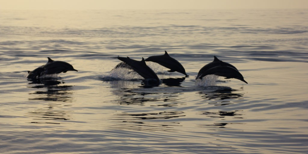 Dolphin-Spotting