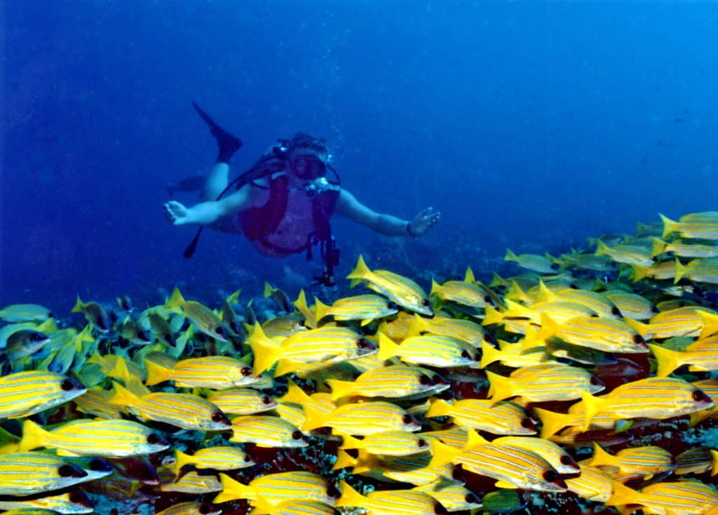 best-time-to-visit-the-maldives-and-enjoy-Scuba-Diving