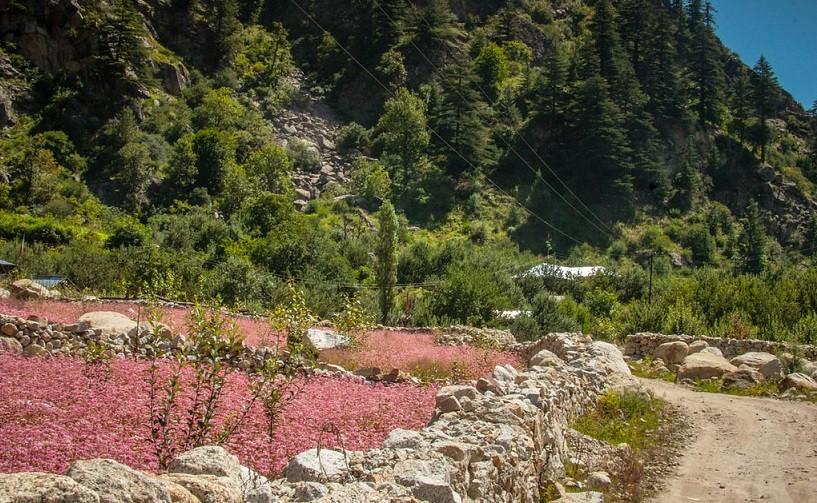 sangla valley himachal pradesh