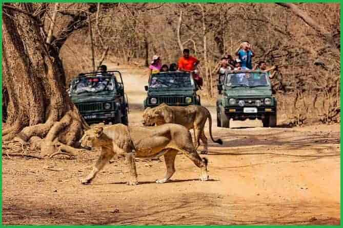 Gir Forest Gujrat india