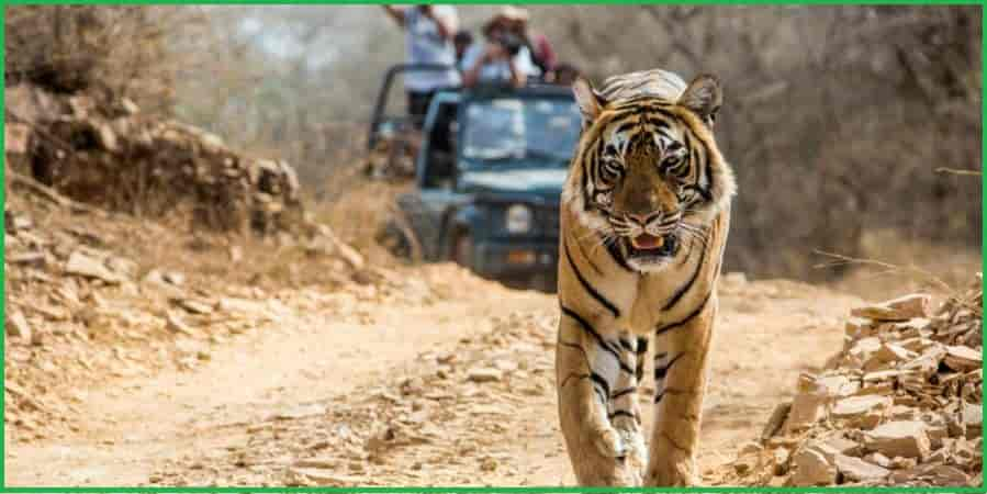 Jim Corbett National Park, Uttarakhand Forests in India