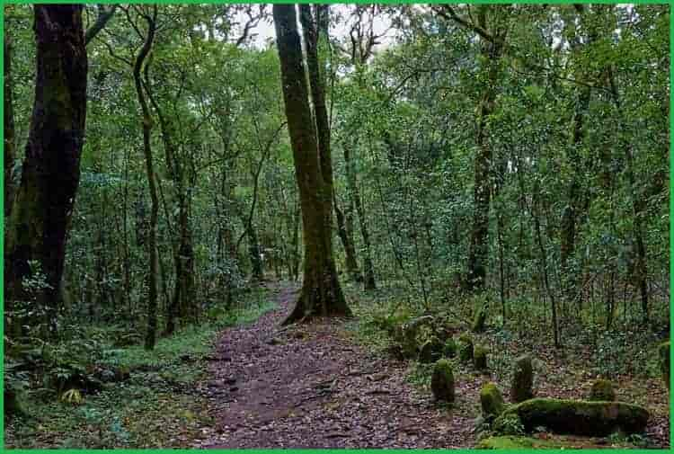 Sacred Groves (Khasi and Jaintia Hills), Meghalaya india