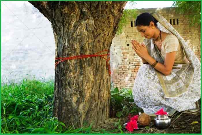 The most prominent examples of the sacred trees which are never cut in India