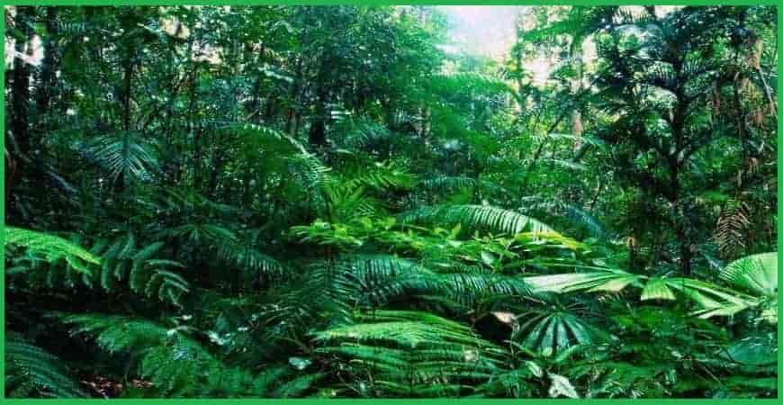Tropical Moist Forests in india