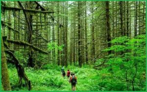 famous and essential names of Forests in India